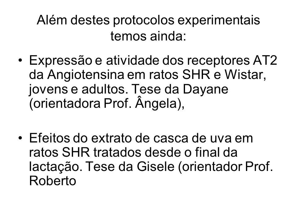 Além destes protocolos experimentais temos ainda: Expressão e atividade dos receptores AT2 da Angiotensina em ratos SHR e Wistar, jovens e adultos. Te