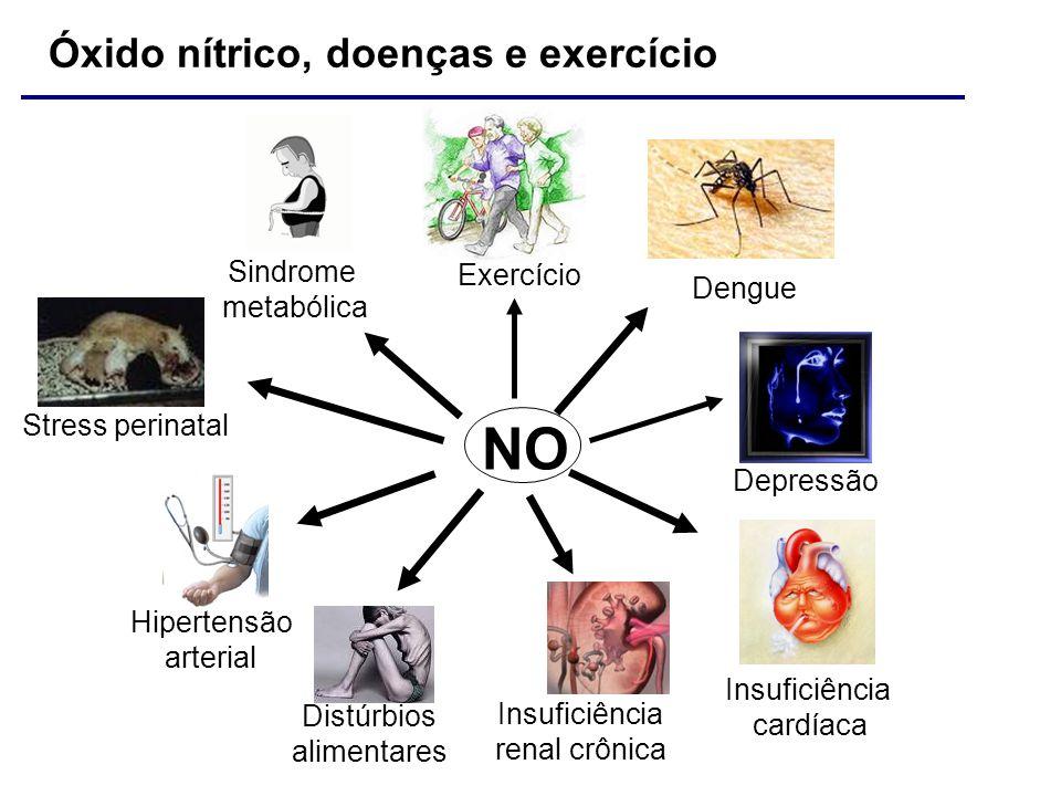 NO Insuficiência cardíaca Dengue Hipertensão arterial Sindrome metabólica Exercício Insuficiência renal crônica Depressão Distúrbios alimentares Óxido