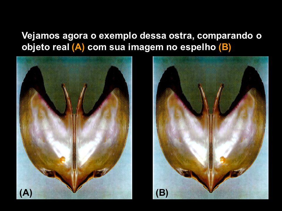 Vejamos agora o exemplo dessa ostra, comparando o objeto real (A) com sua imagem no espelho (B) (A)(B)