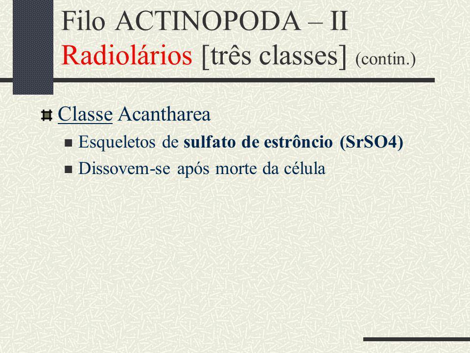 Filo ACTINOPODA – II Radiolários [três classes] (contin.) Classe Acantharea Esqueletos de sulfato de estrôncio (SrSO4) Dissovem-se após morte da célula