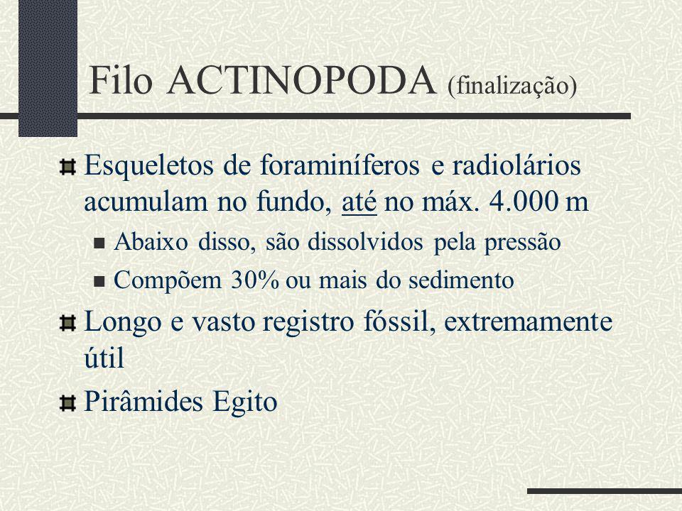 Filo ACTINOPODA (finalização) Esqueletos de foraminíferos e radiolários acumulam no fundo, até no máx.