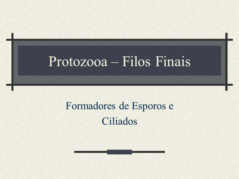 Protozooa – Filos Finais Formadores de Esporos e Ciliados