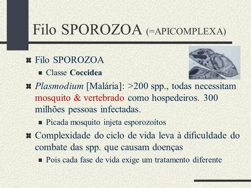 Filo SPOROZOA Classe Coccidea Plasmodium [Malária]: >200 spp., todas necessitam mosquito & vertebrado como hospedeiros.