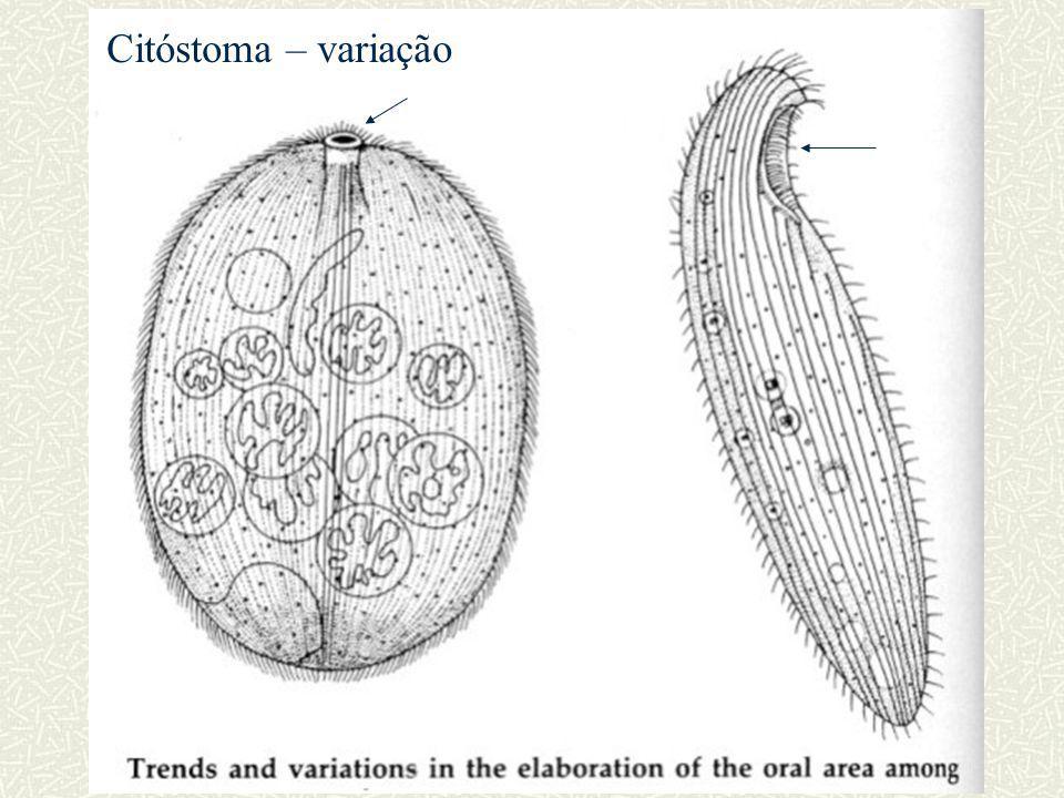 Citóstoma – variação