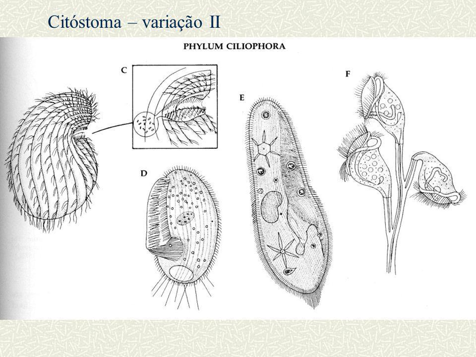 Citóstoma – variação II