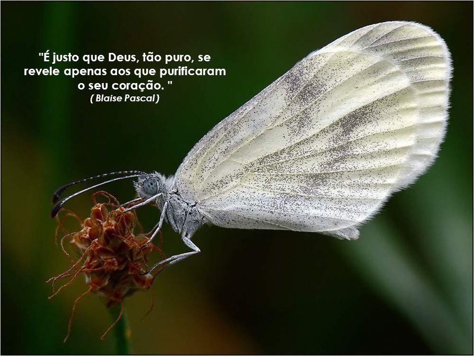 É justo que Deus, tão puro, se revele apenas aos que purificaram o seu coração.