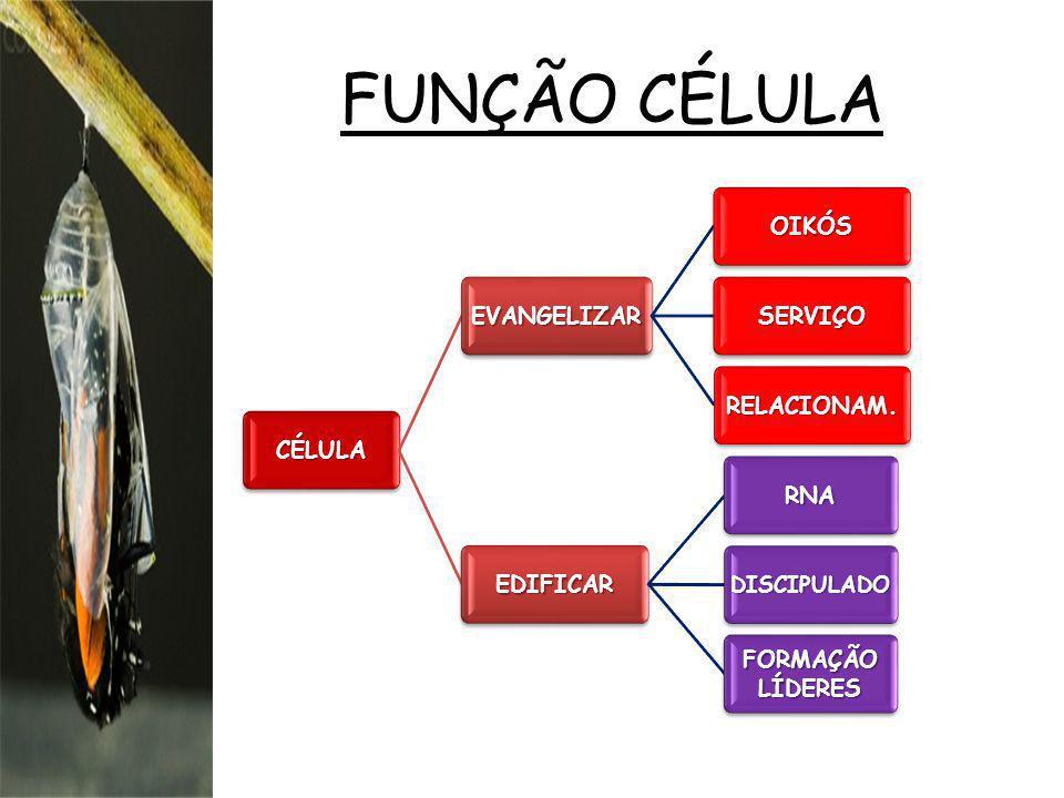 FUNÇÃO CÉLULA CÉLULA EVANGELIZAR OIKÓS SERVIÇO RELACIONAM. EDIFICAR RNA DISCIPULADO FORMAÇÃO LÍDERES