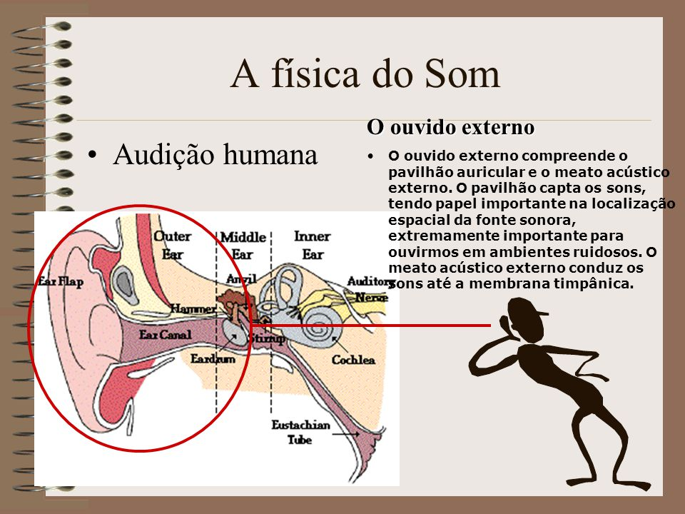 A física do Som Audição humana O ouvido externo O ouvido externo compreende o pavilhão auricular e o meato acústico externo.