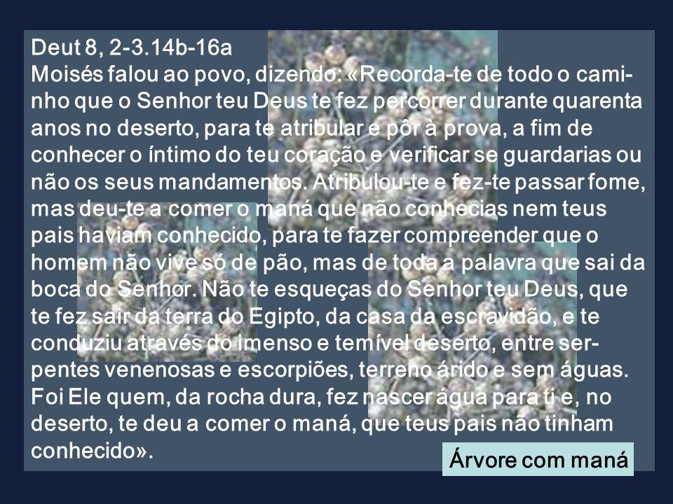 Ciclo A O Corpo e o Sangue de Cristo Corpus Christi O Corpo e o Sangue de Cristo Corpus Christi 23 de Junho de 2011 Cântico de comunhão bizantino.Cânt