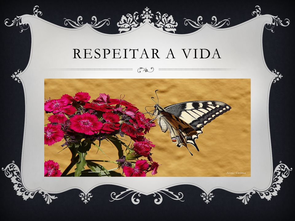 RESPEITAR A VIDA