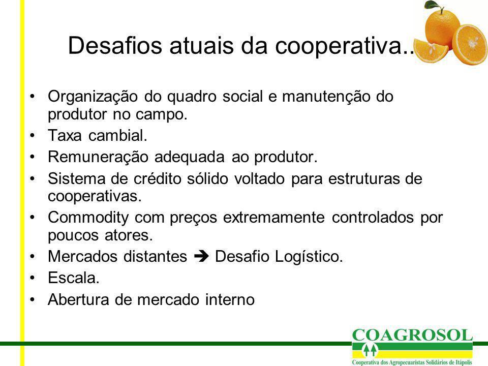 Desafios atuais da cooperativa... Organização do quadro social e manutenção do produtor no campo. Taxa cambial. Remuneração adequada ao produtor. Sist