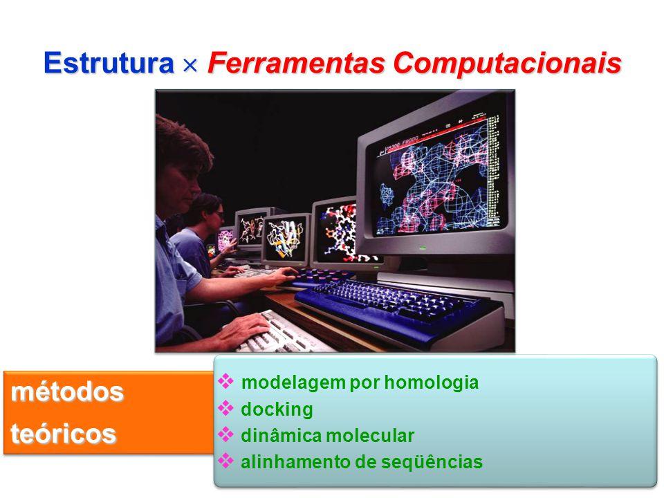 IC15 Estrutura Ferramentas Computacionais métodos teóricos modelagem por homologia docking dinâmica molecular alinhamento de seqüências