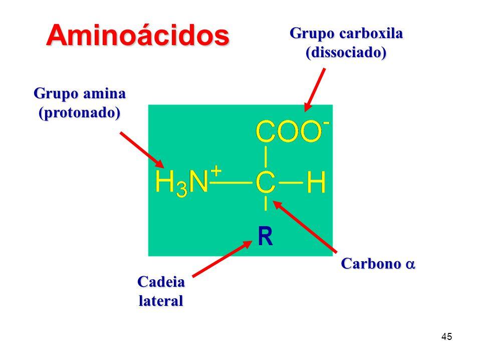 45 Grupo carboxila (dissociado) Grupo amina (protonado) Cadeialateral Carbono Carbono R Aminoácidos
