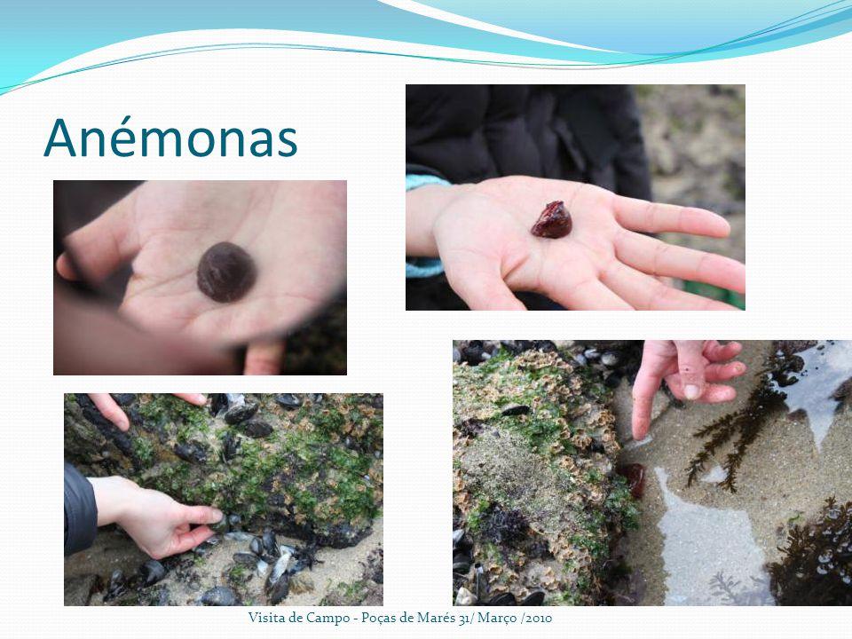 Anémonas Visita de Campo - Poças de Marés 31/ Março /2010