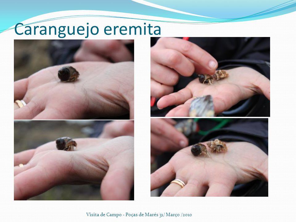 Caranguejo eremita Visita de Campo - Poças de Marés 31/ Março /2010