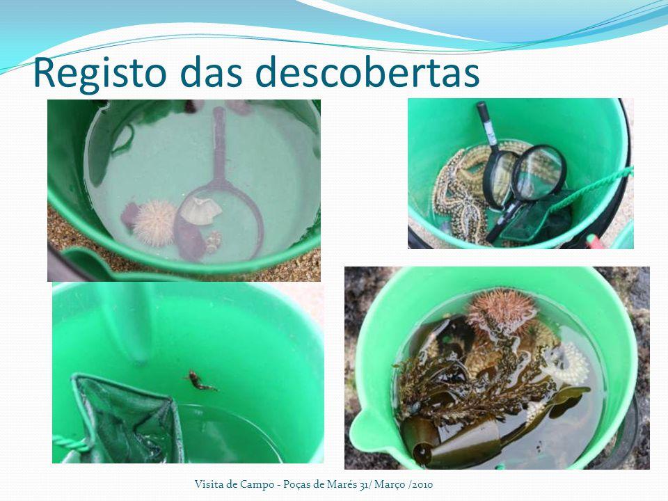 Registo das descobertas Visita de Campo - Poças de Marés 31/ Março /2010