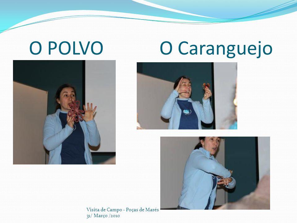 CHEGADA À PRAIA DO CRUZEIRO Visita de Campo - Poças de Marés 31/ Março /2010