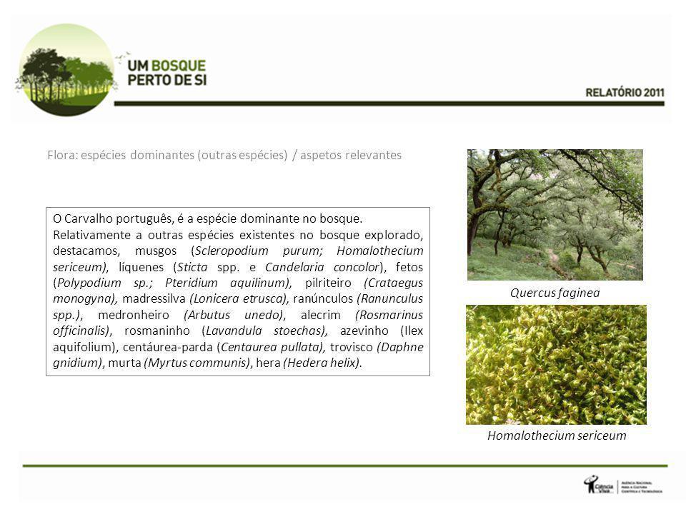O Carvalho português, é a espécie dominante no bosque. Relativamente a outras espécies existentes no bosque explorado, destacamos, musgos (Scleropodiu