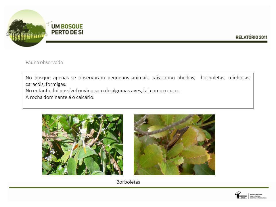 No bosque apenas se observaram pequenos animais, tais como abelhas, borboletas, minhocas, caracóis, formigas.