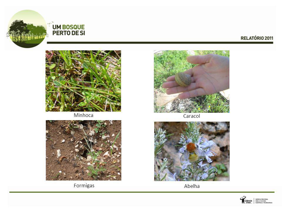 Formigas Caracol Minhoca Abelha