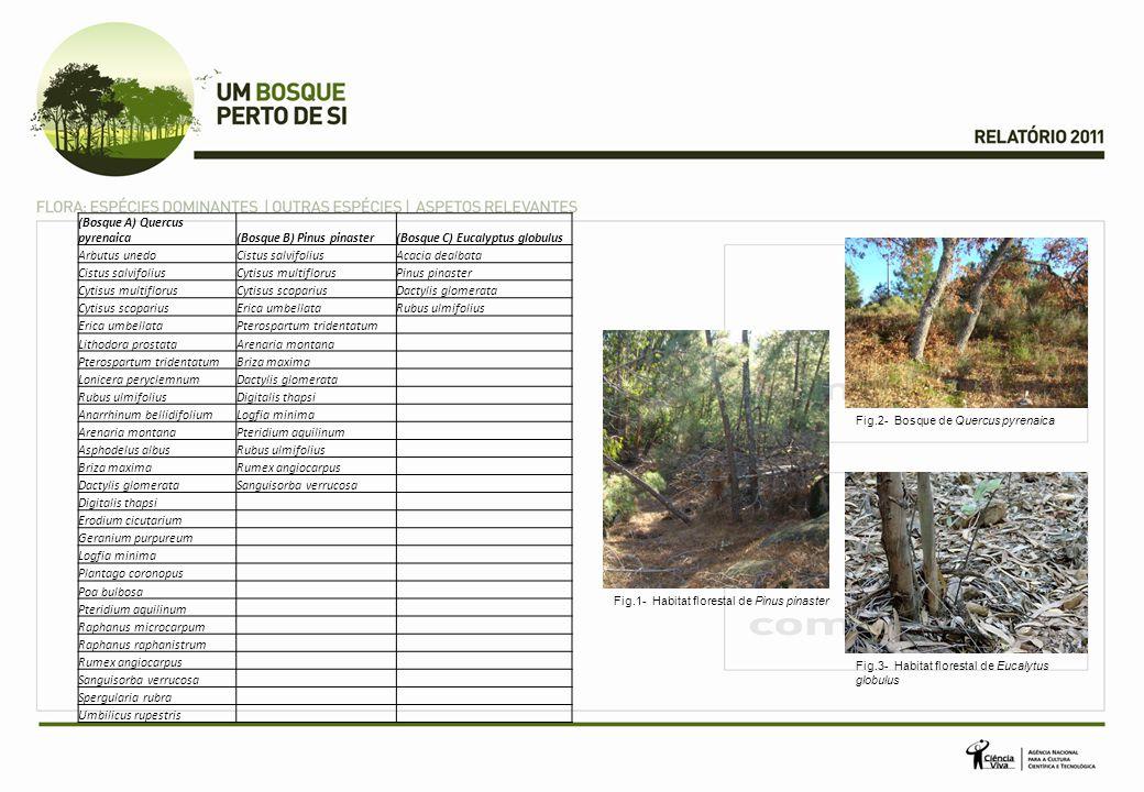 (Bosque A) Quercus pyrenaica(Bosque B) Pinus pinaster(Bosque C) Eucalyptus globulus Arbutus unedoCistus salvifoliusAcacia dealbata Cistus salvifoliusC