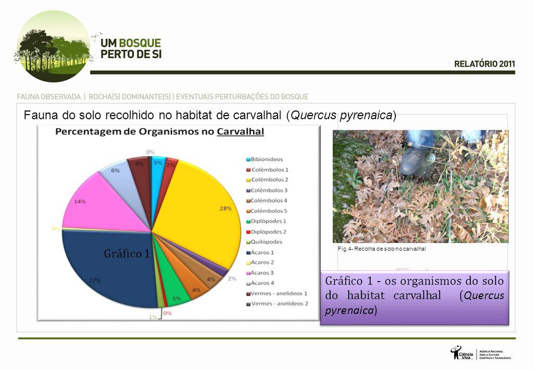 Fauna do solo recolhido no habitat de carvalhal (Quercus pyrenaica) Gráfico 1 - os organismos do solo do habitat carvalhal ( Quercus pyrenaica) Gráfic