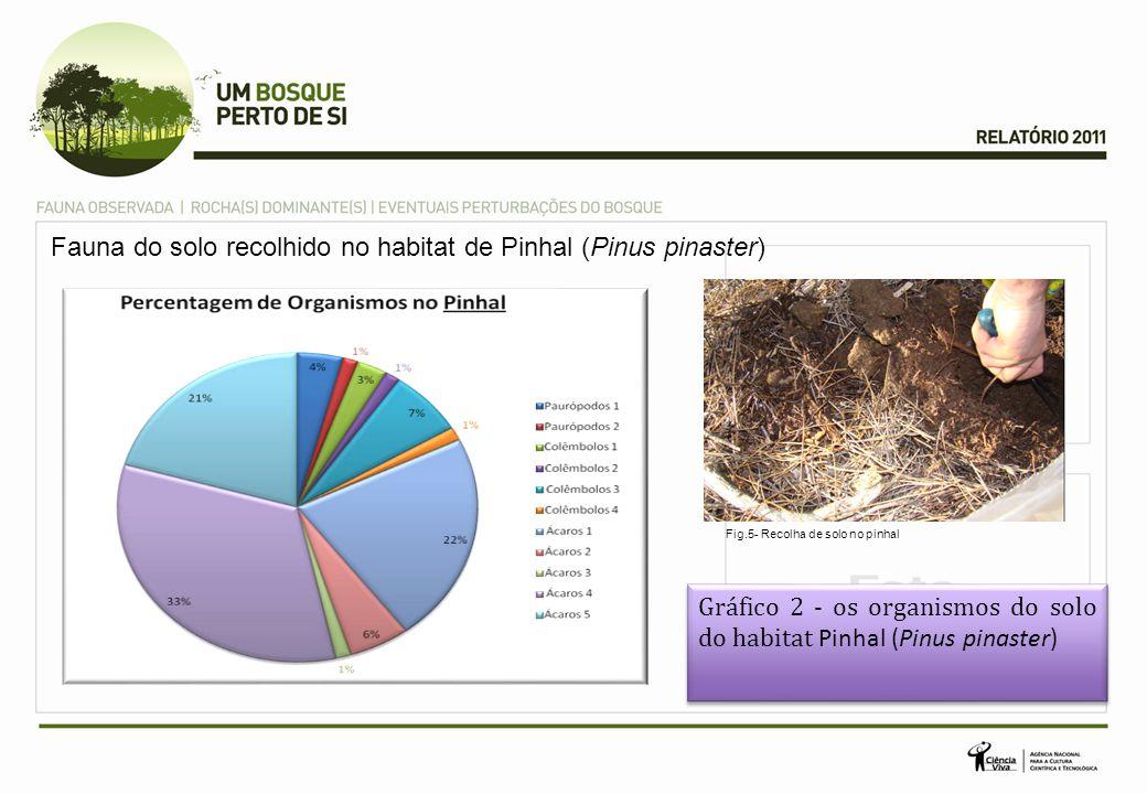 Fauna do solo recolhido no habitat de Pinhal (Pinus pinaster) Gráfico 2 - os organismos do solo do habitat Pinhal (Pinus pinaster) Gráfico 2 - os organismos do solo do habitat Pinhal (Pinus pinaster) Fig.5- Recolha de solo no pinhal