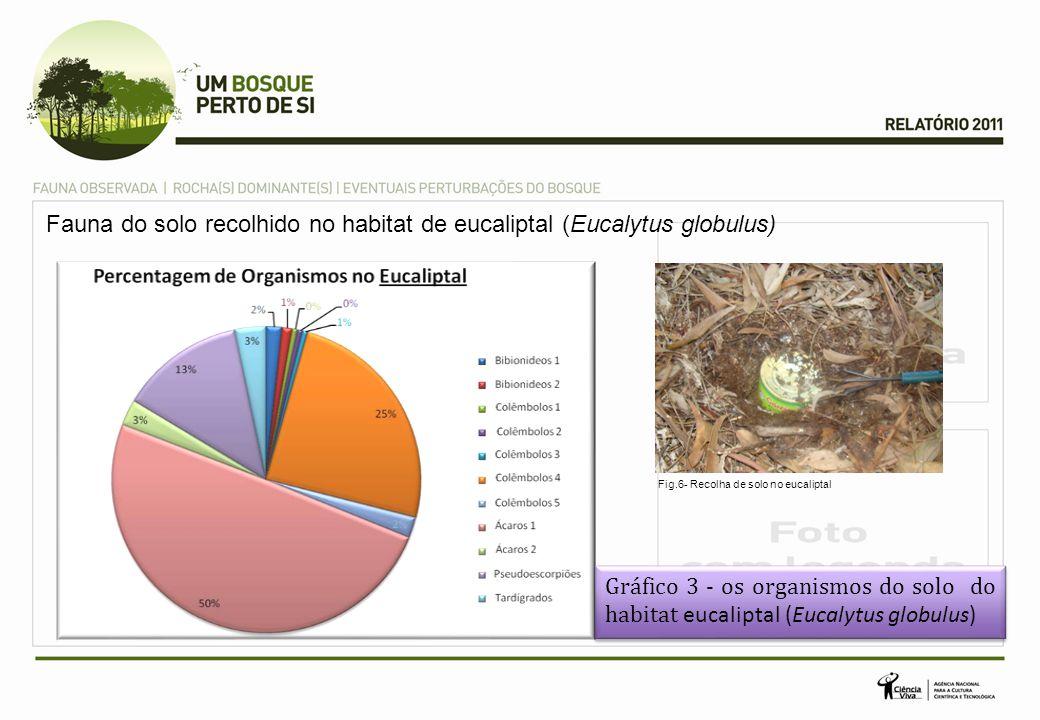 Fauna do solo recolhido no habitat de eucaliptal (Eucalytus globulus) Gráfico 3 - os organismos do solo do habitat eucaliptal (Eucalytus globulus) Gráfico 3 - os organismos do solo do habitat eucaliptal (Eucalytus globulus) Fig.6- Recolha de solo no eucaliptal