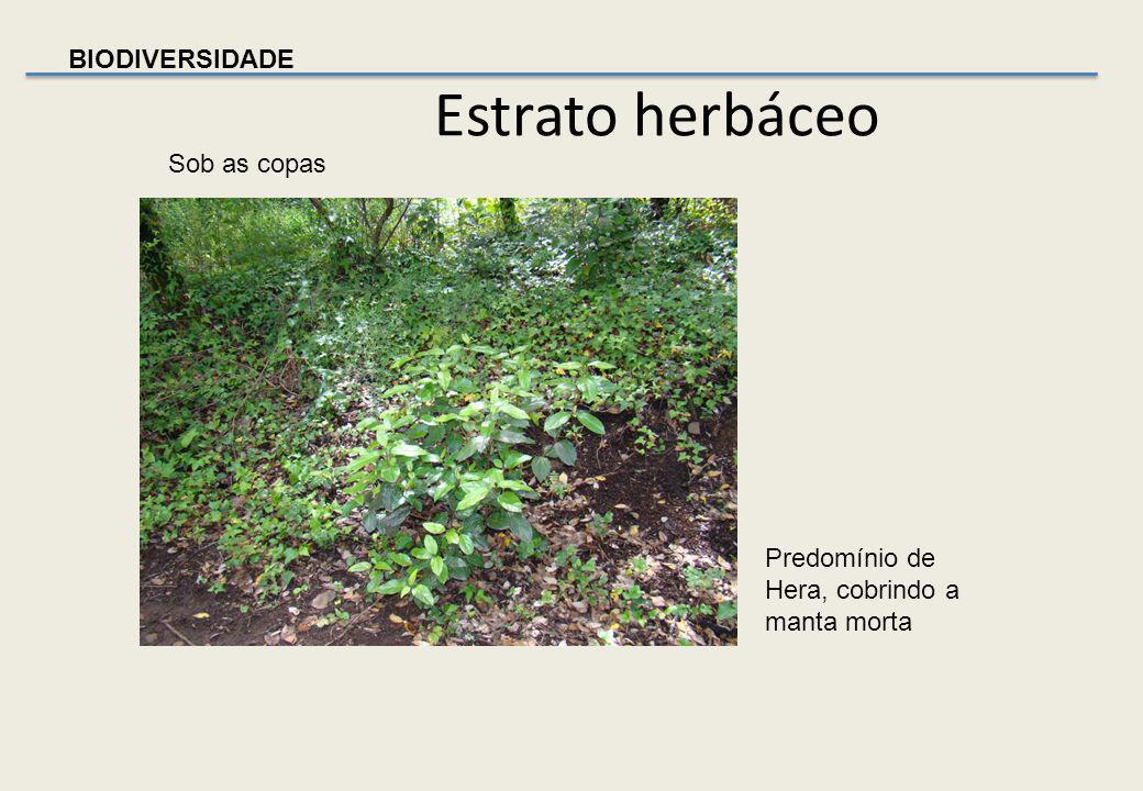 BIODIVERSIDADE Estrato herbáceo Trepadeira, corriola; Família Convolvulaceae; Género Convolvulus Na orla do Bosque