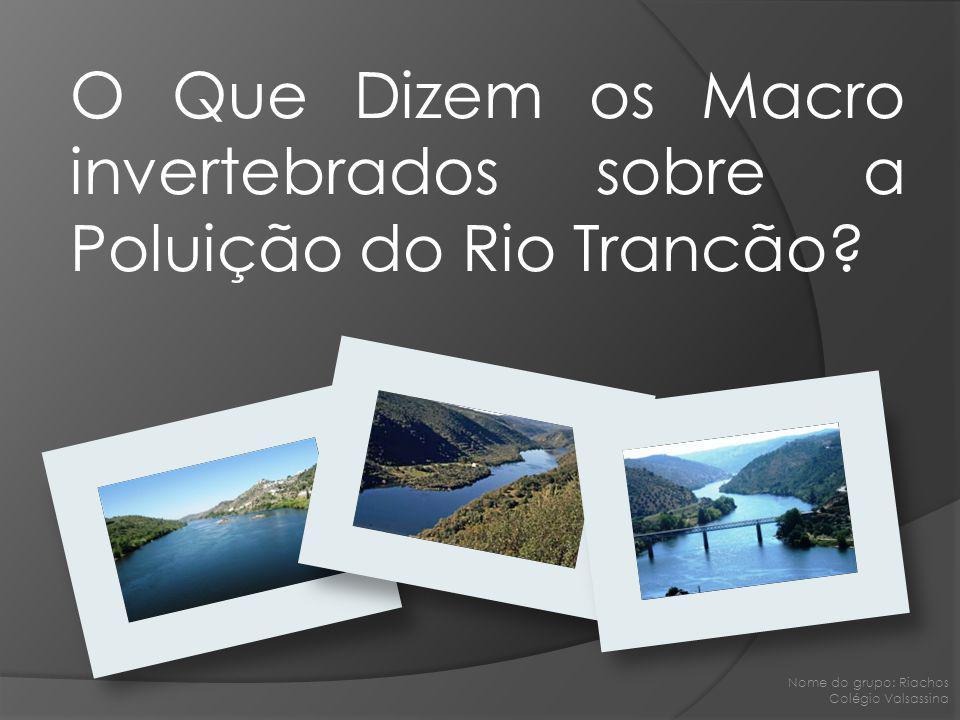 O Que Dizem os Macro invertebrados sobre a Poluição do Rio Trancão? Nome do grupo: Riachos Colégio Valsassina