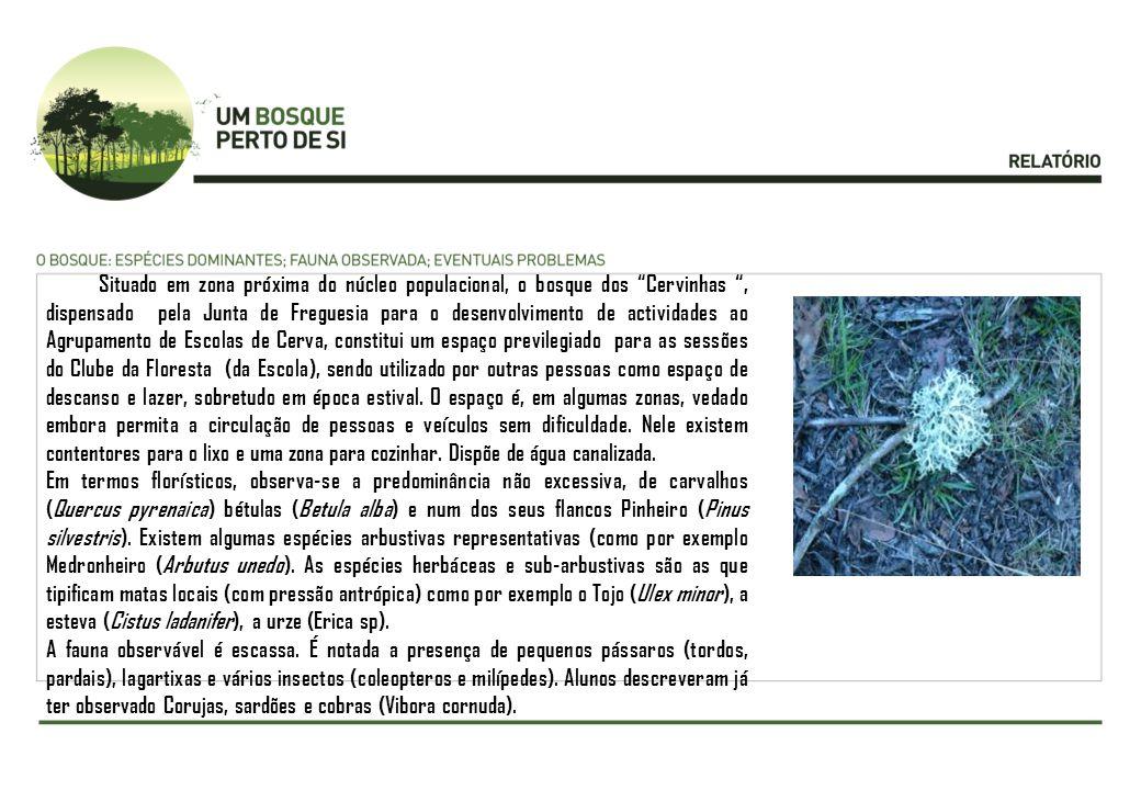 Situado em zona próxima do núcleo populacional, o bosque dos Cervinhas, dispensado pela Junta de Freguesia para o desenvolvimento de actividades ao Ag