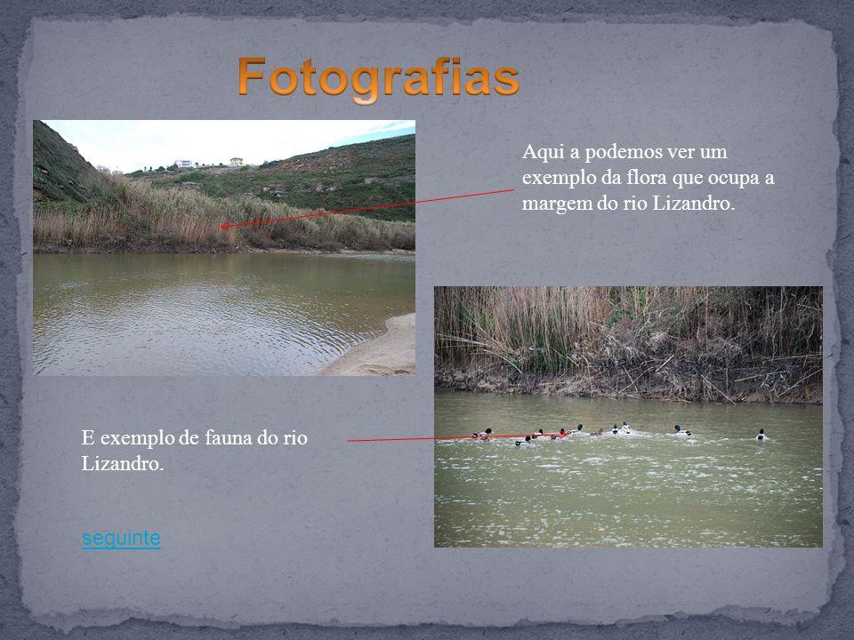 seguinte Aqui a podemos ver um exemplo da flora que ocupa a margem do rio Lizandro. E exemplo de fauna do rio Lizandro.