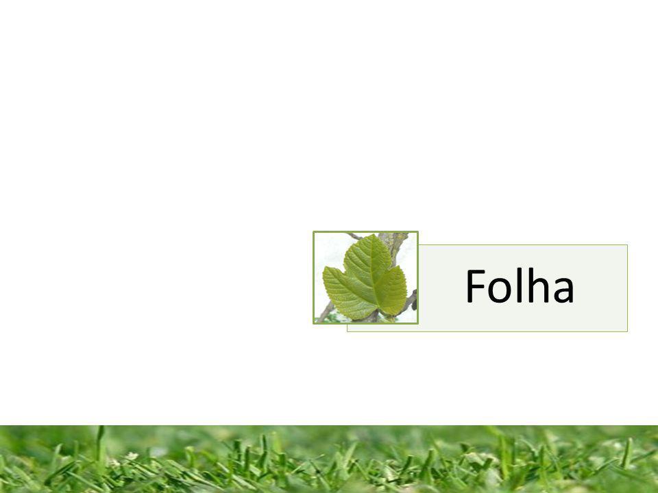 Constituição de uma folha completa Bainha - é a porção da folha que envolve parte do caule.
