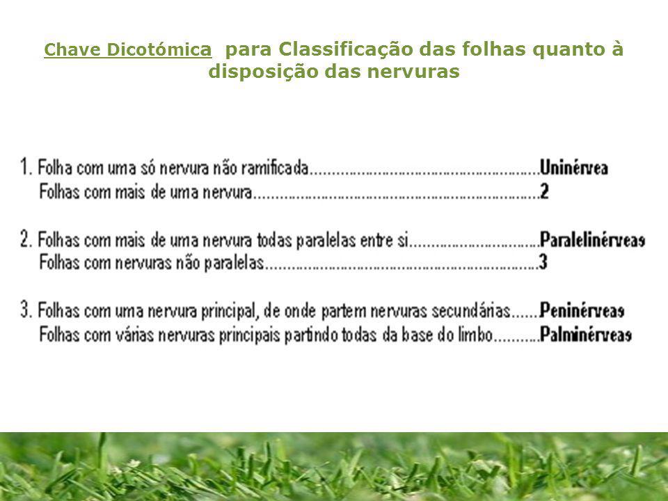 Chave Dicotómic a para Classificação das folhas quanto à disposição das nervuras