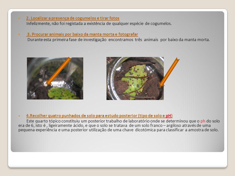 2. Localizar a presença de cogumelos e tirar fotos Infelizmente, não foi registada a existência de qualquer espécie de cogumelos. 3. Procurar animais