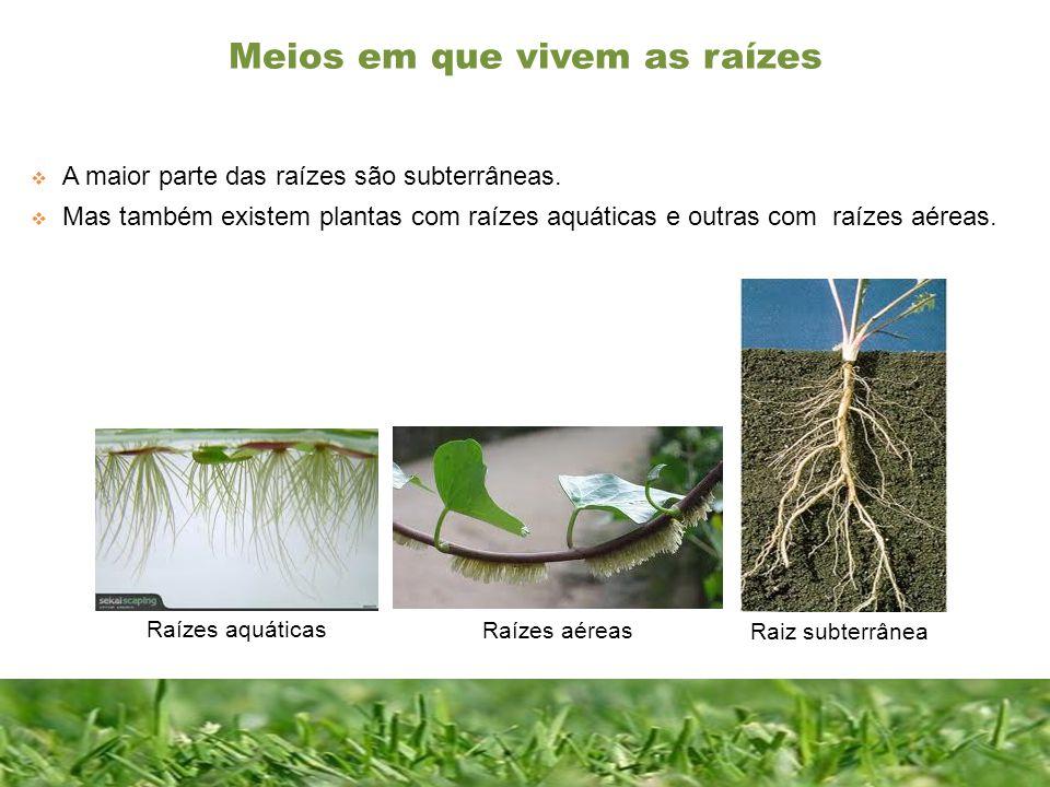Meios em que vivem as raízes Constituição de uma folha completa A maior parte das raízes são subterrâneas. Mas também existem plantas com raízes aquát