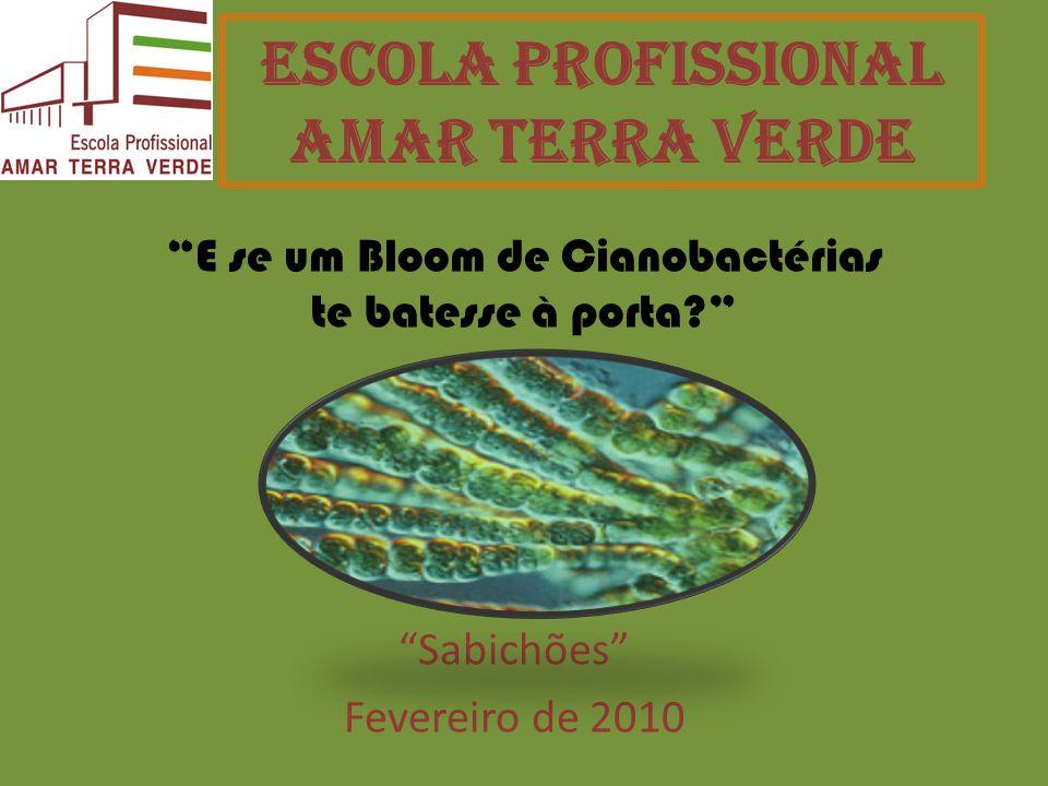 Escola Profissional Amar Terra Verde Sabichões Fevereiro de 2010 E se um Bloom de Cianobactérias te batesse à porta?