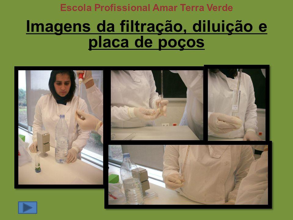 Imagens da filtração, diluição e placa de poços Escola Profissional Amar Terra Verde