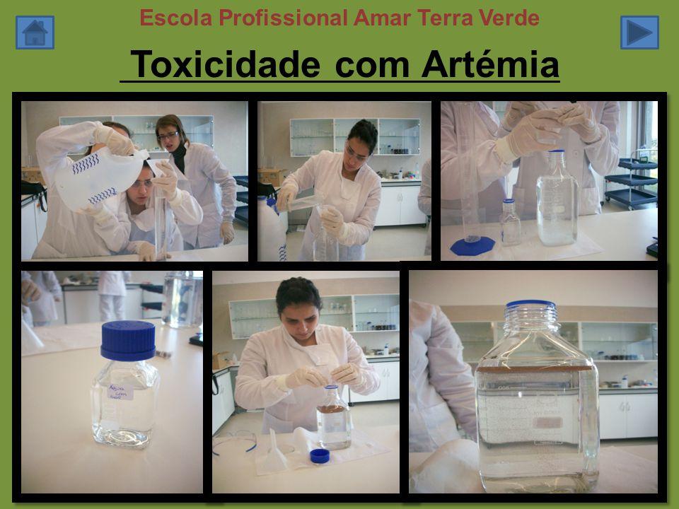 Toxicidade com Artémia Escola Profissional Amar Terra Verde