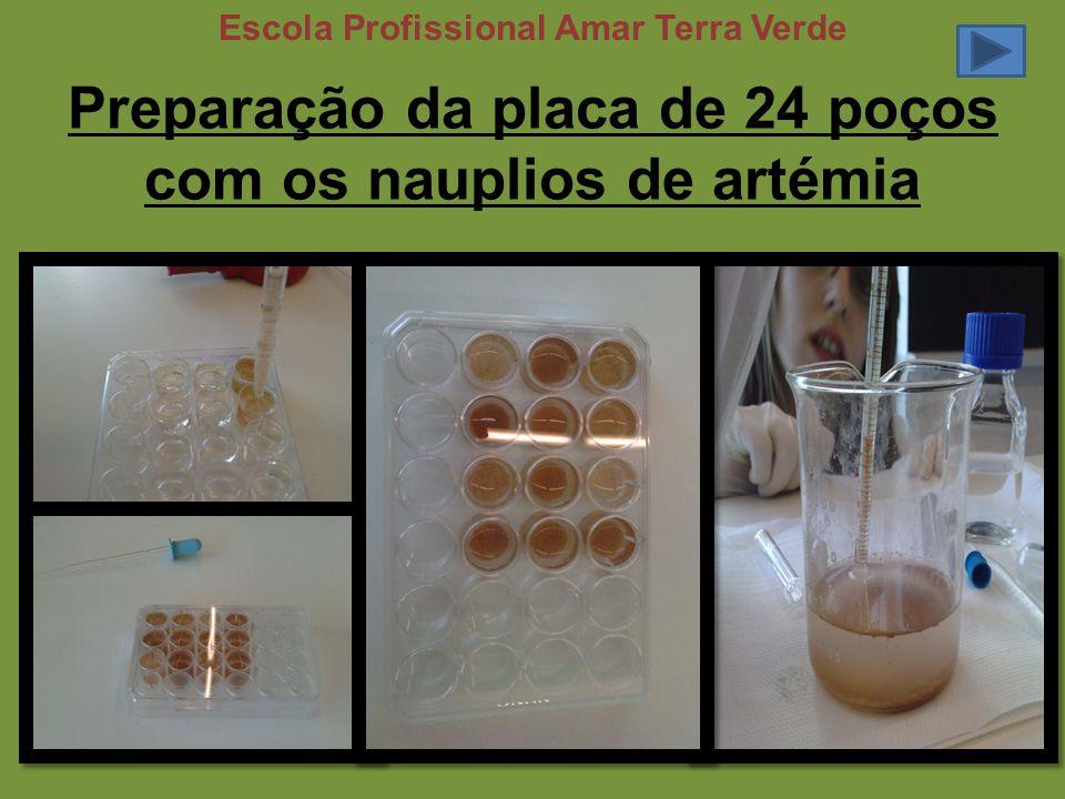 Preparação da placa de 24 poços com os nauplios de artémia Escola Profissional Amar Terra Verde