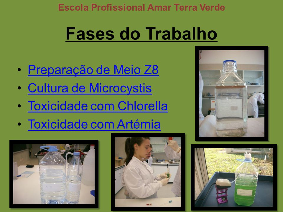 Fases do Trabalho Preparação de Meio Z8 Cultura de Microcystis Toxicidade com Chlorella Toxicidade com Artémia Escola Profissional Amar Terra Verde