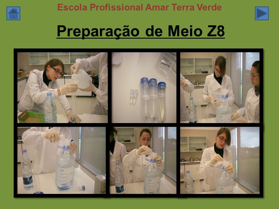 Preparação de Meio Z8 Escola Profissional Amar Terra Verde