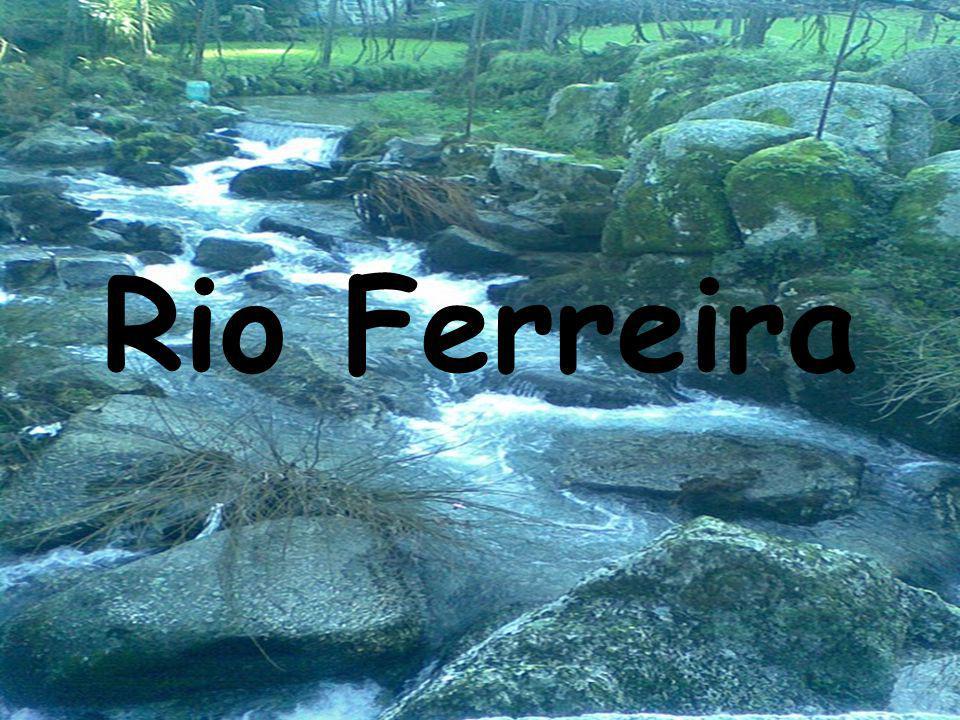 Rio Ferreira poluído? Macroinvertebrados?
