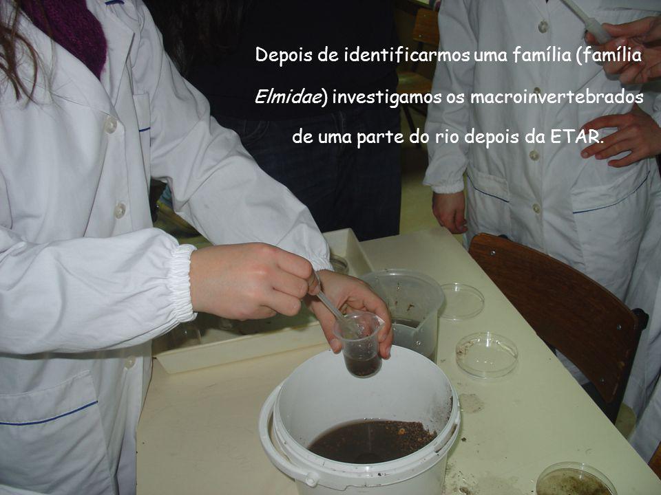Depois de identificarmos uma família (família Elmidae) investigamos os macroinvertebrados de uma parte do rio depois da ETAR.