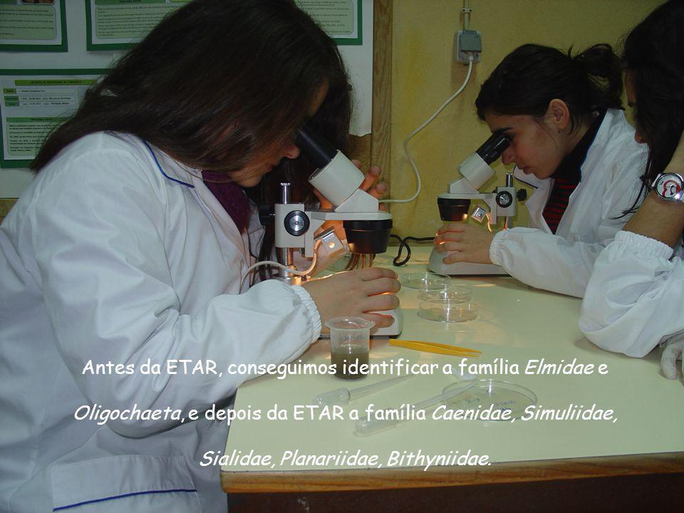 Antes da ETAR, conseguimos identificar a família Elmidae e Oligochaeta, e depois da ETAR a família Caenidae, Simuliidae, Sialidae, Planariidae, Bithyn