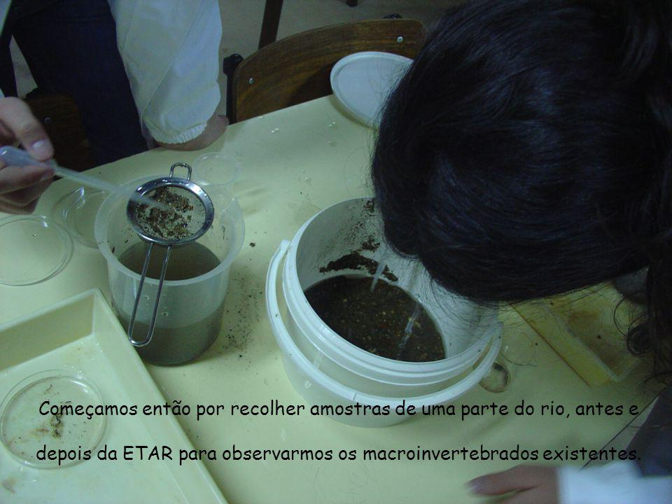 Começamos então por recolher amostras de uma parte do rio, antes e depois da ETAR para observarmos os macroinvertebrados existentes.