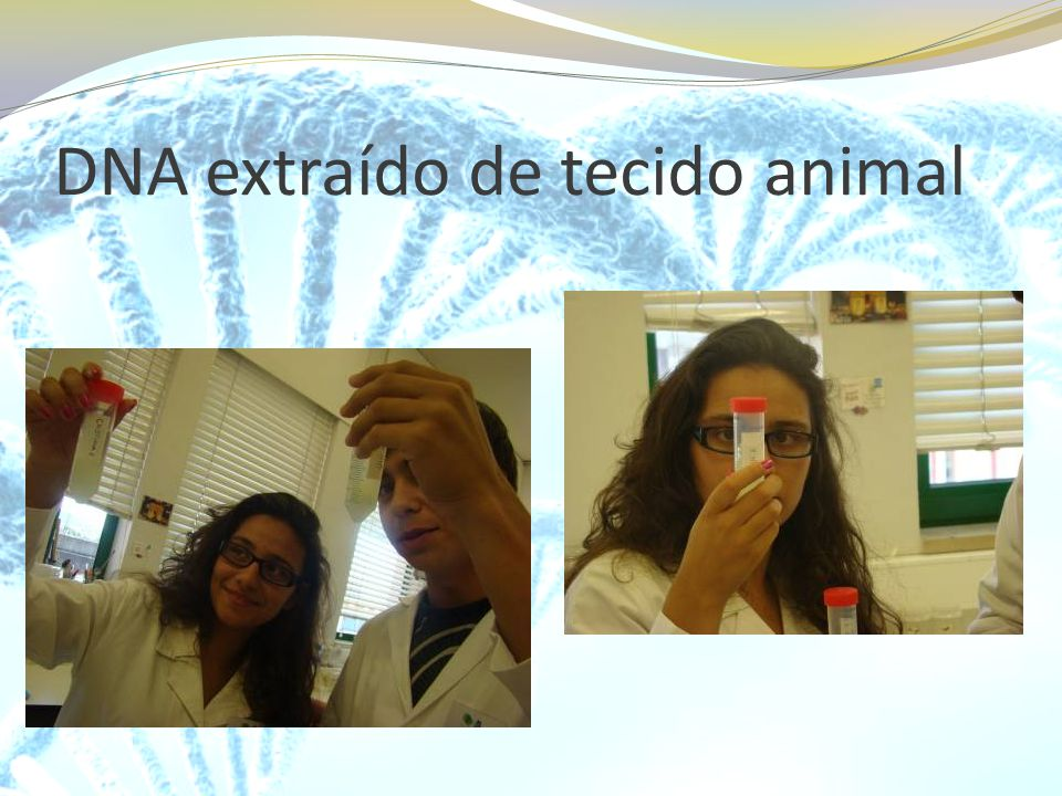 DNA extraído de tecido animal