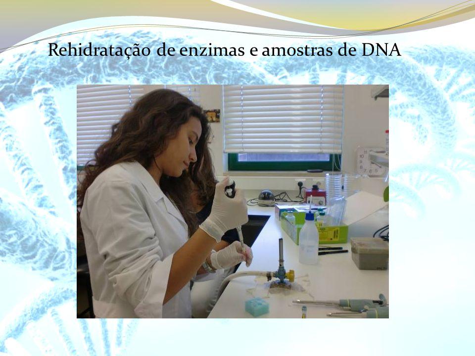 Rehidratação de enzimas e amostras de DNA
