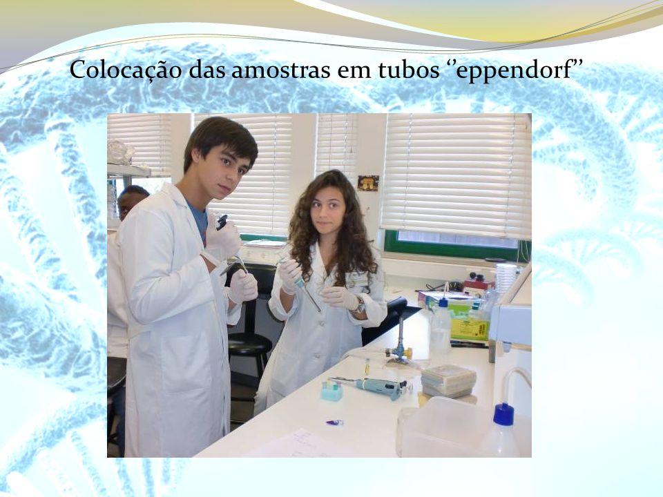 Colocação das amostras em tubos eppendorf