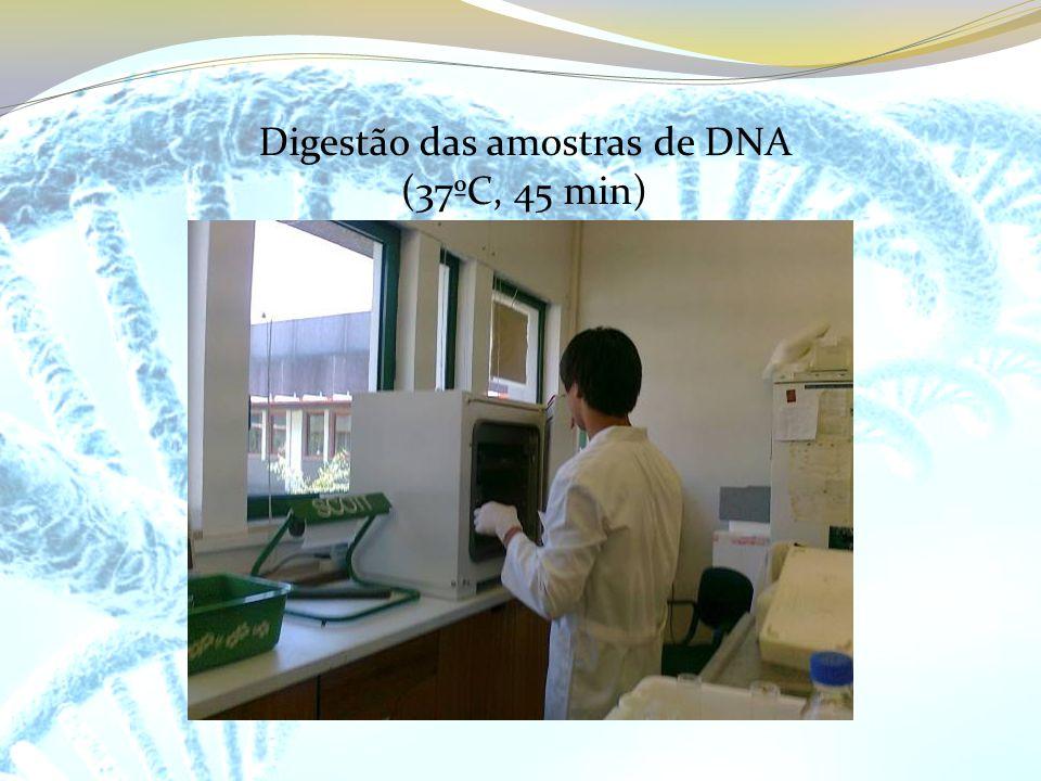 Digestão das amostras de DNA (37ºC, 45 min)